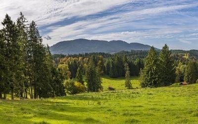 Nemčija in njeni prostrani gozdovi
